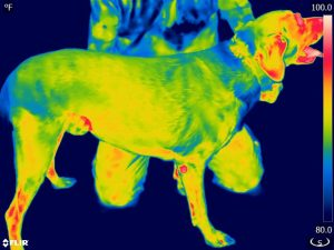 Thermographic Image Right Side