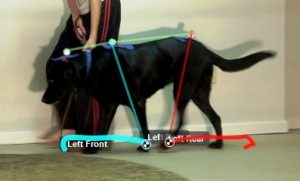Motion Analysis of the Dog