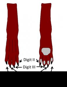Dog Toes Designation