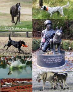 Athletic and Working Dogs